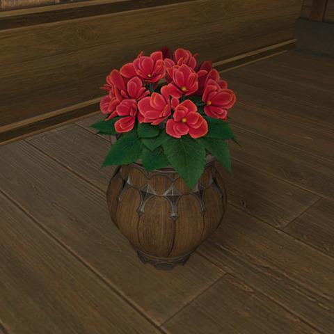 アザレアの鉢植2