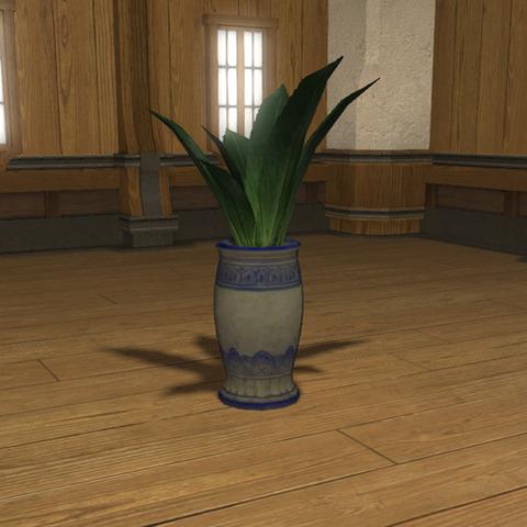 マゲイの鉢植2
