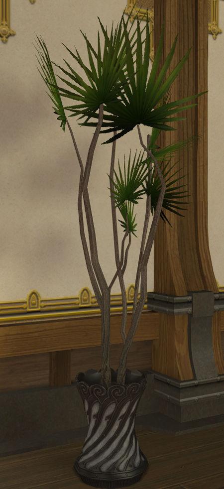 ドラセナの鉢植