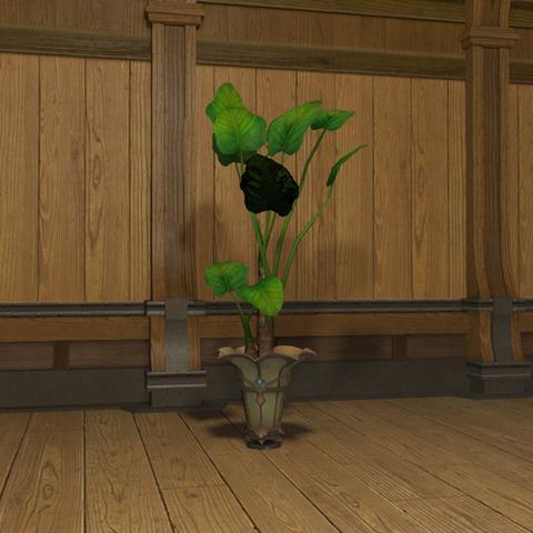 アロカシアの鉢植